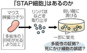 Stap_2
